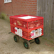 Re- Home Series. Kent, UK. 2009. Battery farm hens in pallets being transported from a battery farm.