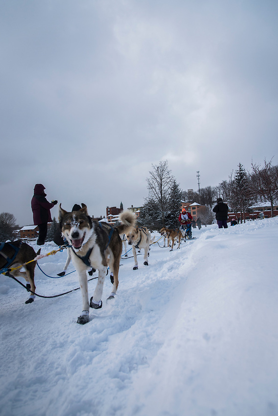 Scenes from the finish of the UP 200 Sled Dog Championship in downtown Marquette, Michigan.