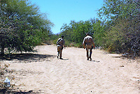 Border Patrol Agents tracking for fresh footprints from Illegals crossing south of Tucson, AZ.  This photo was taken during a ride along with Borstar Border Patrol Agents south of Tucson..Photo by AJ Alexander