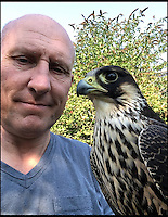 BNPS.co.uk (01202 558833)<br /> Pic: RNASYeovilton/BNPS<br /> <br /> Head Falconer, Brian Bird with &lsquo;Winkle&rsquo;, a male (tiercel) Peregrine.<br /> <br /> Britain's greatest aviator Eric 'Winkle' Brown continues to defend from the skies after a falcon under military command was named in his honour. <br /> <br /> 'Winkle' the peregrine is the latest addition to a squadron of birds of prey that protect aircrafts against bird strikes at the Royal Naval Air Station Yeovilton in Somerset. <br /> <br /> He was born in May, barely two months after Brown died, leaving the aptly named Brian Bird, head falconer at the station's Bird Control Unit, with few other names on the table.