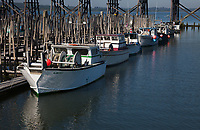 Commercial Fishing Boats, Astoria Marina, Oregon, OR, America, USA.