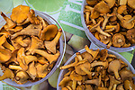 "Chanterelle mushrooms, known in Russia as ""little foxes,"" are sold along the roadside on Sunday, August 18, 2013 near Potapovo, Russia."