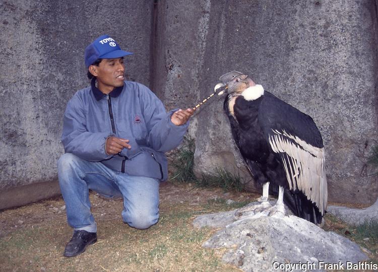 Peruvian man with Andean Condor near Cuzco