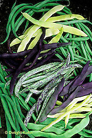 HS30-089x  Bean - mixed bean harvest