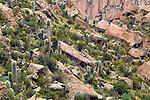 Cardon Cactus (Echinopsis atacamensis) group in dry puna, Ciudad de Piedra, Andes, western Bolivia