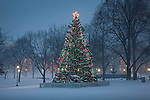 Christmas snow on Boston Common, Boston, MA