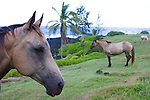 Horseback riding is one of the many outdoor activities available at the Hotel Hana in Maui, Hawaii