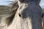A closeup of a bay horse mane and eyes in Three Forks Montana