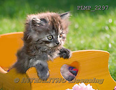 Marek, ANIMALS, REALISTISCHE TIERE, ANIMALES REALISTICOS, cats, photos+++++,PLMP2297,#a#