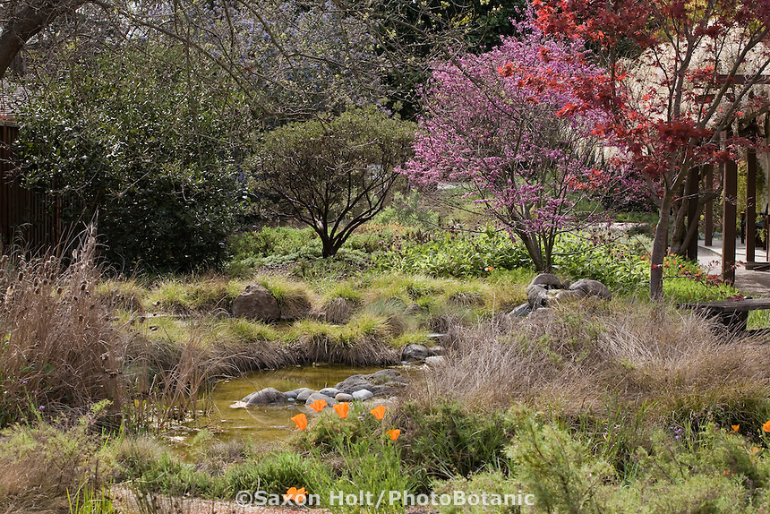 Backyard small space naturalistic, sustainable bird habitat garden with pond, native grasses and small trees