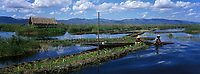 Asie/Birmanie/Myanmar/Plateau Shan/Ywathit: Lac Inle - Dans les jardins flottants