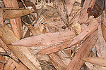 Bamboo leaves on forest floor, Ranomafana National Park, Madagascar