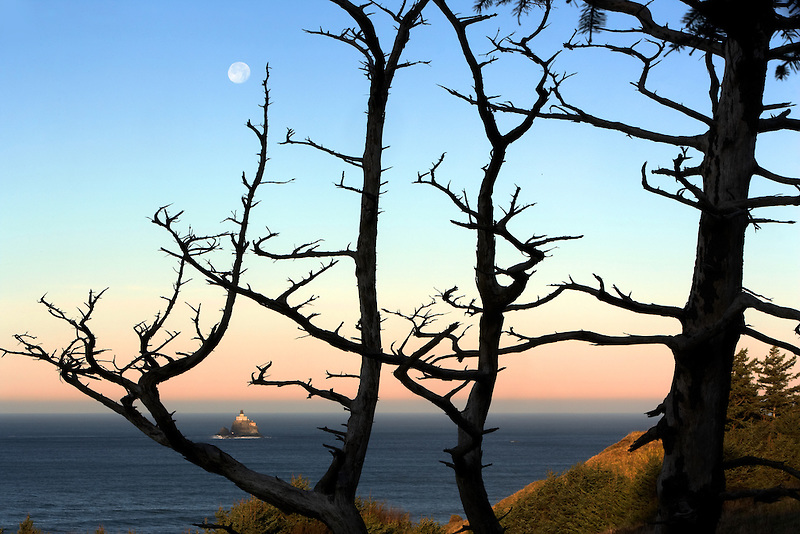 Tillamook Rock Lighthouse and dead tree with full moon. Oregon
