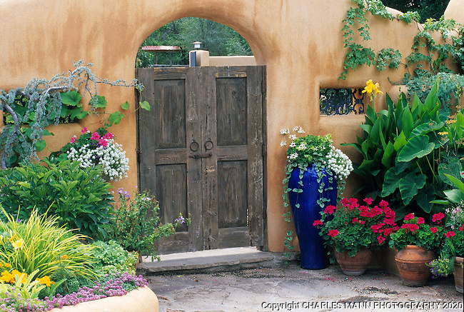Susan Blevins of Taos, New Mexico, created an elaborate home garden featuring containers, perennial beds, a Japanese themed path and a regional style that reflectes the Spanish and pueblo architecture of the area. Colorful ceramic post and planst like a weeping Atlas cedar and red geraniums flank a wooden gate set in the the pueblo style adobe wall.