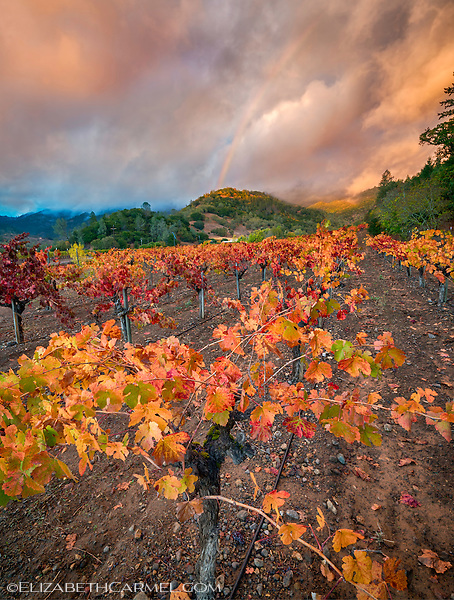 Sunset Rainbow, Napa Valley