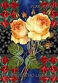 Kris, FLOWERS, BLUMEN, FLORES, paintings+++++,PLKKK3546,#f#, EVERYDAY ,roses