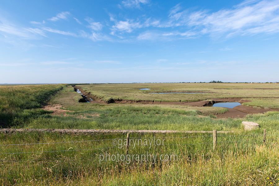 Land previously reclaimed from the wash and returned back to salt marsh - Lincolnshire, July