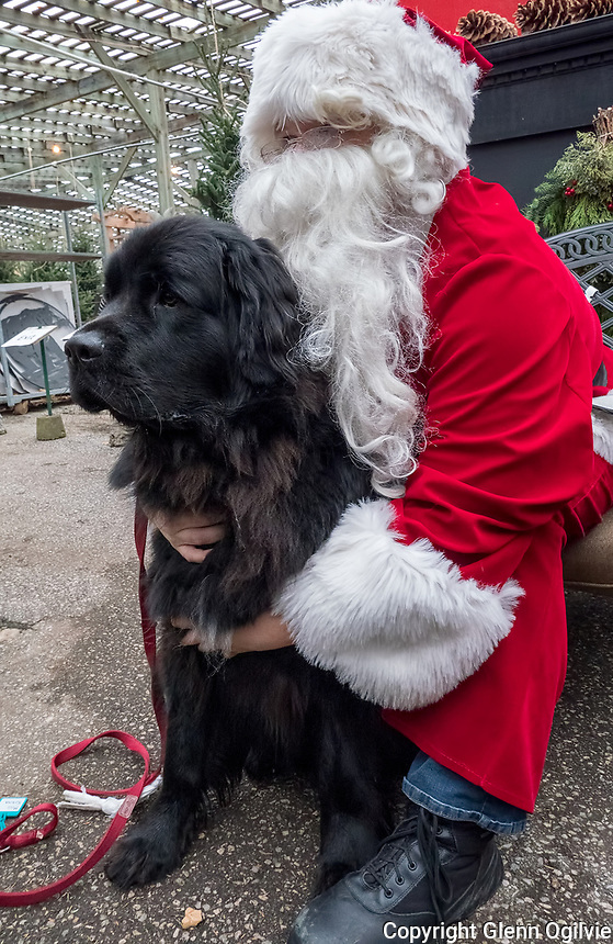 Ferrets, horses, cats and dogs al made their way to Santa's chair for Wanda's Wish held at DeGroot's Nursery, recently. The popular event is held by the Sarnia and District Humane Society to help raise funds for extraordinary medical costs for animals.