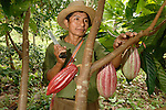 Mayan Village, Cacao growing -Belize