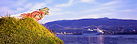 Sapphire Princess Cruise Ship entering Port of Vancouver Harbour under Lions Gate Bridge, Vancouver, BC, British Columbia, Canada - Replica of SS Empress of Japan Figurehead in Stanley Park - Panoramic View