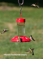 01162-12819 Ruby-throated Hummingbirds (Archilochus colubris) at Dr. JB's Hummingbird Feeder, Marion County, IL