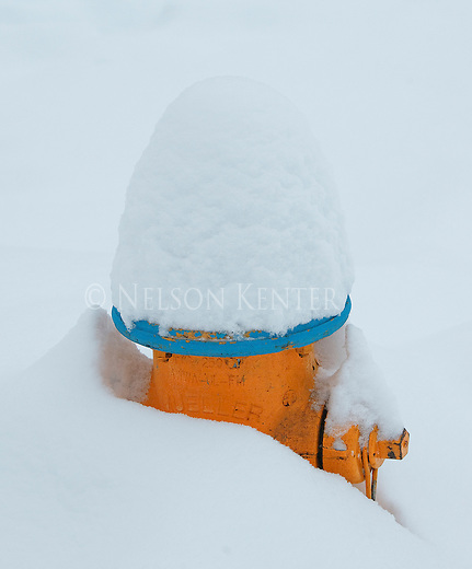 Snow covered fire hydrant after a winter storm