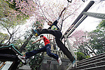 April 8, 2012, Tokyo, Japan - Tokyo tracers practice parkour during the cherry blossom season, Tokyo, Japan, April 8, 2012. Parkour is a modern method of physical training, also known as freerunning. It was founded in France in the 1990s. There is a small group of around 50 parkour practitioners in Tokyo. (Photo by Tony McNicol/AFLO)