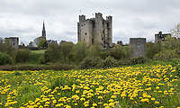 The town of Trim is most famous for its castle.