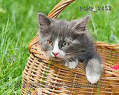 Marek, ANIMALS, REALISTISCHE TIERE, ANIMALES REALISTICOS, cats, photos+++++,PLMP2452,#a#