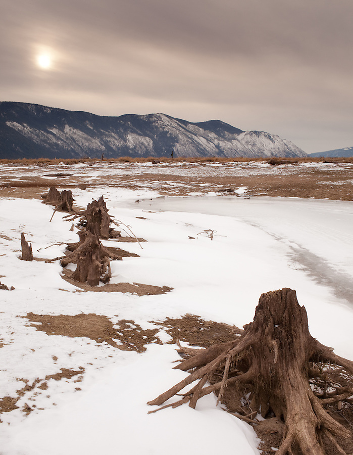Decaying stumps paint a bleak picture along the shore of a frozen pond near Clark Fork, Idaho.