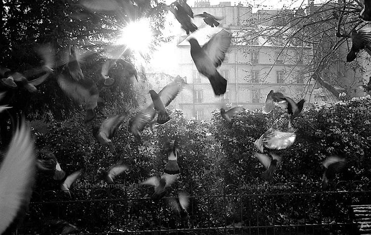 12.2002 <br /> <br /> Pigeons flying near Notre dame.<br /> <br /> Pigeons s'envolant près de Notre dame.