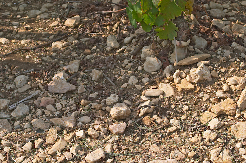 Soil detail. Sand. Calcareous. Beaune, Cote d'Or, Burgundy, France