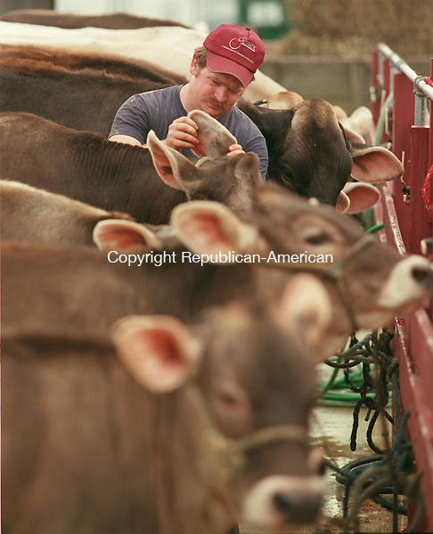 GOSHEN, CT 09/04/98--0904CA01.tif  Ron Waldron from Beech Hill Farm in Colebrook C.T., checks the identification numbers stamped in the ear of the cow, during check-in at the Goshen Fair. The Goshen Fair begins on Saturday through Monday, including rides, games, animals, and several different craft shows.--CRAIG AMBROSIO staff photo for REPORTERS NAME / STANDALONE PHOTO  (Filed in Scans/Scan-In)