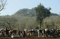 TANZANIA Handeni, Masai nomads with Zebu cow herd / TANSANIA Handeni, Masai Nomaden mit Zebu Rinderherde in einem Kral