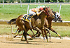 Holy Mo winning at Delaware Park on 7/5/12