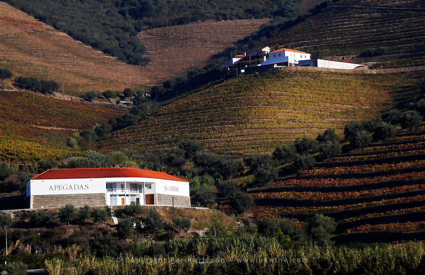 vineyards quinta velha apegadas douro portugal