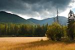 Meadow below Huckleberry Mountain, Glacier National Park, Montana