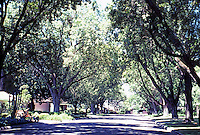 Modesto CA:  Looking along Patricia Lane--where the Heckendorf House is.  Photo 2000.