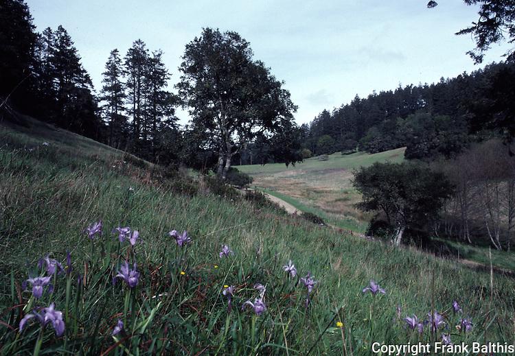 meadow on trail near Bear Valley, Douglas iris blooming