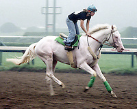 Clarence Stewart, first colt registered as white by the Jockey Club, at Saratoga in 1979