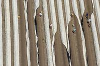 4415/Spargel:EUROPA, DEUTSCHLAND, NIEDERSACHSEN, 28.05.2005: Spargel,  Spargelfeld, Spargelstechen, Ernte, Landwirtschaft, osteuropaeische Erntehelfer, polnische Erntehelfer, Planen auf dem Feld,  Luftbild, Luftansicht