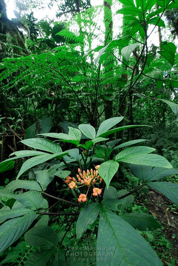 Los Quetzales, Parque Internacional La Amistad, Cerro Punta, Volcan Baru, Panama