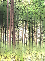 Woodland trees in summer