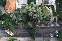 29.03.2018 - Queda de árvore na rua Afonso de Freitas em SP