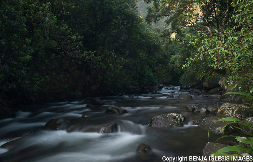 Early morning slow motion shot of the iao valley stream.