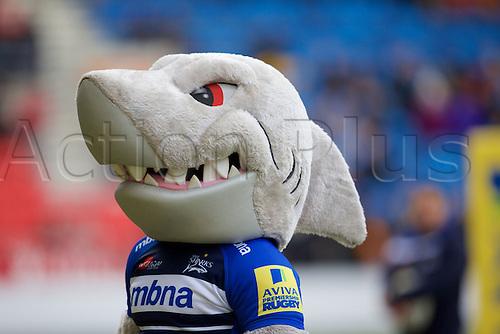 05.03.2016. AJ Bell Stadium, Salford, England. Aviva Premiership. Sale versus Harlequins. Sale mascot Sharky.