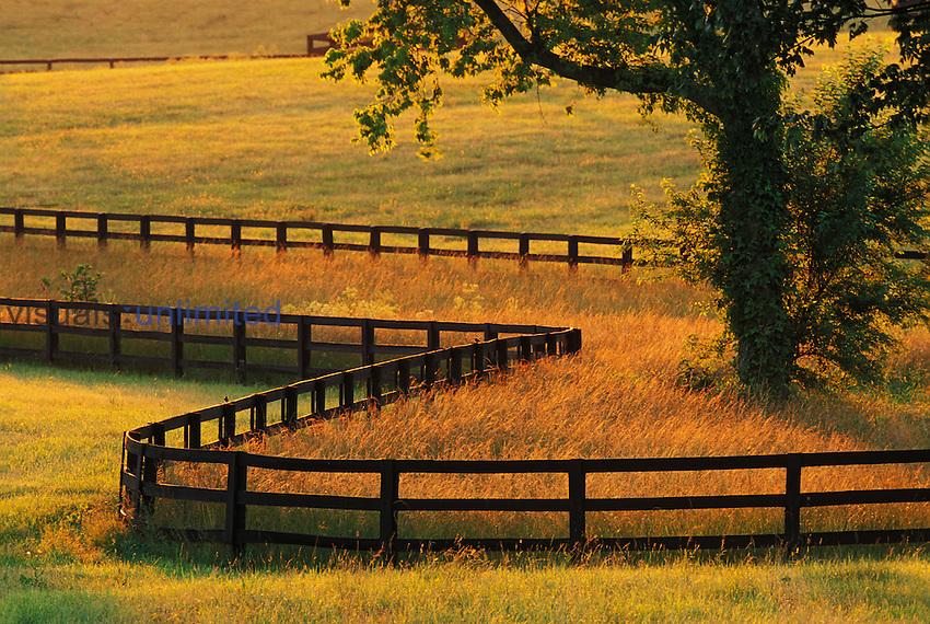 Winding fence on a horse farm at sunrise, Versailles, Kentucky, USA.