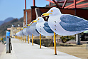 "March 21, 2016, Kagawa, Japan - The ""Sea Gulls Parking Lot"" an installation art produced by Takahito Kimura at Megijima island in Kagawa prefecture, Japan's southern island of Shikoku on Sunday, March 21, 2016 as a part of Setouchi Triennale 2016. Setouchi Triennale art festival started at islands of Setonaikai mediterranean sea from March 20 through November 6.  (Photo by Yoshio Tsunoda/AFLO) LWX -ytd-"