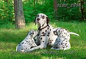 Marek, ANIMALS, REALISTISCHE TIERE, ANIMALES REALISTICOS, dogs, photos+++++,PLMP2896,#a#, EVERYDAY