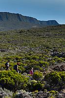 France, île de la Réunion, Parc national de La Réunion, classé Patrimoine Mondial de l'UNESCO, volcan du Piton de la Fournaise, randonneurs sur les sentiers du haut de l'Enclos // France, Reunion island (French overseas department), Parc National de La Reunion (Reunion National Park), listed as World Heritage by UNESCO, Piton de la Fournaise volcano, hikers on the trail at the top of the Enclos